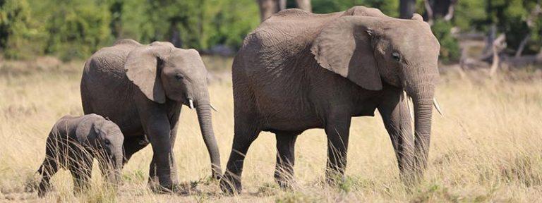 Safari nei parchi nazionali del Kanya