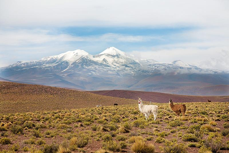 Bolivia Best of