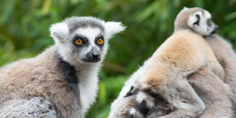 Tour nel Sud Madagascar