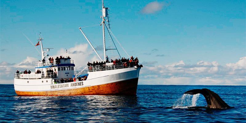 whale safari in Norvegia