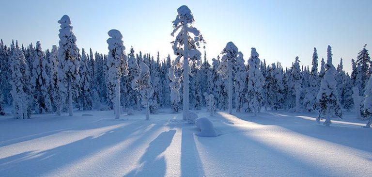 Ski Trekking in Finlandia lungo il confine russo
