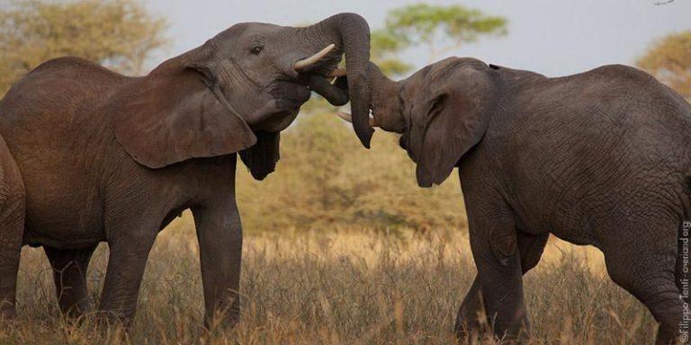 Safari in Tanzania 3gg