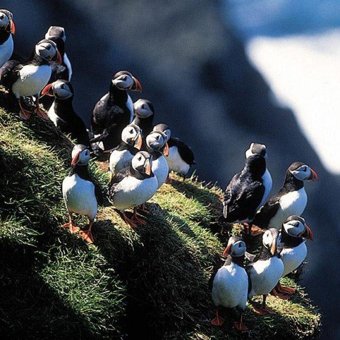 Faroe-islands03